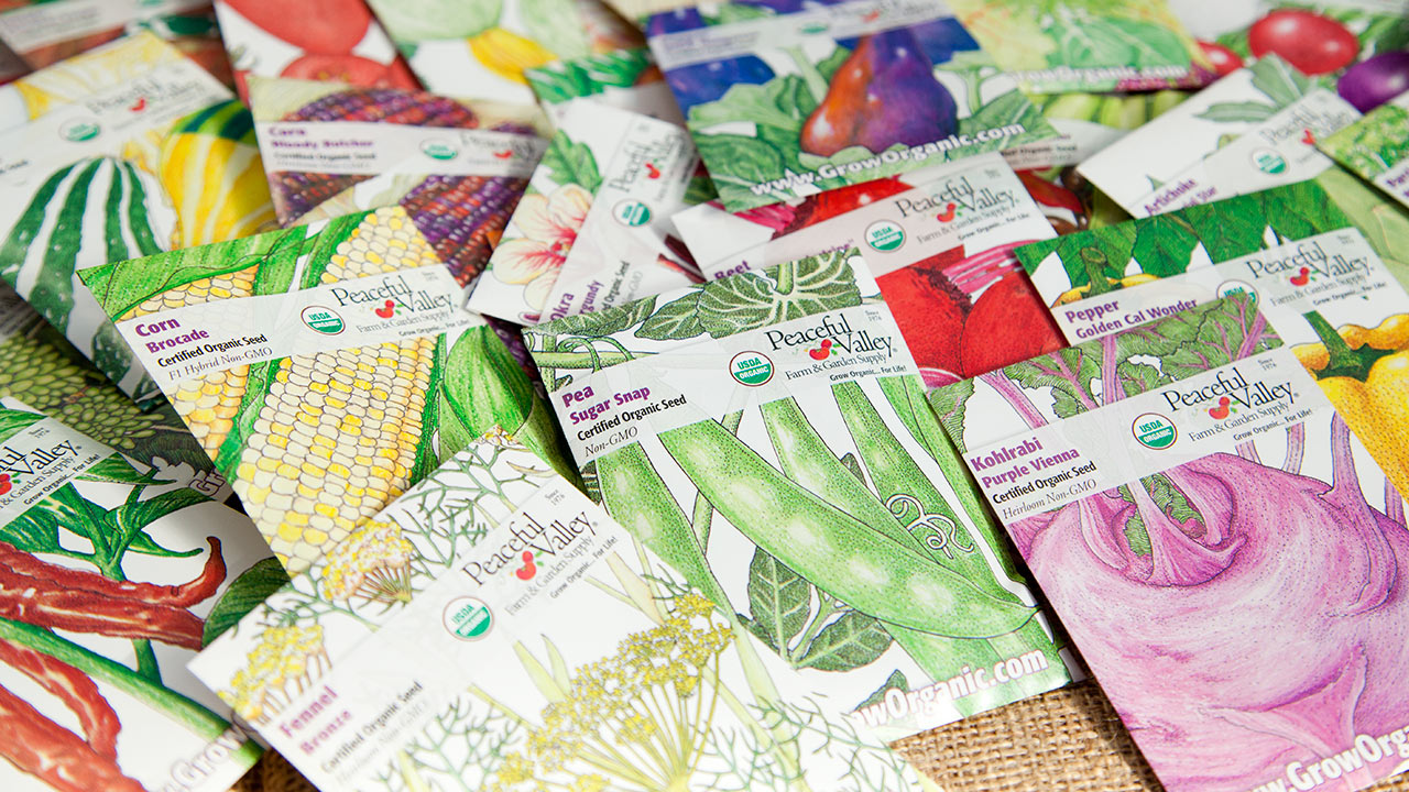 Top 3 Reasons to Buy Organic Seeds