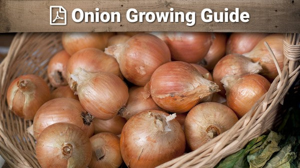 Onion Growing Guide