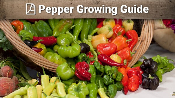 Pepper Growing Guide