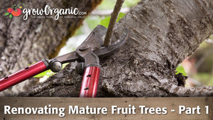 Renovating Mature Fruit Trees - Part 1