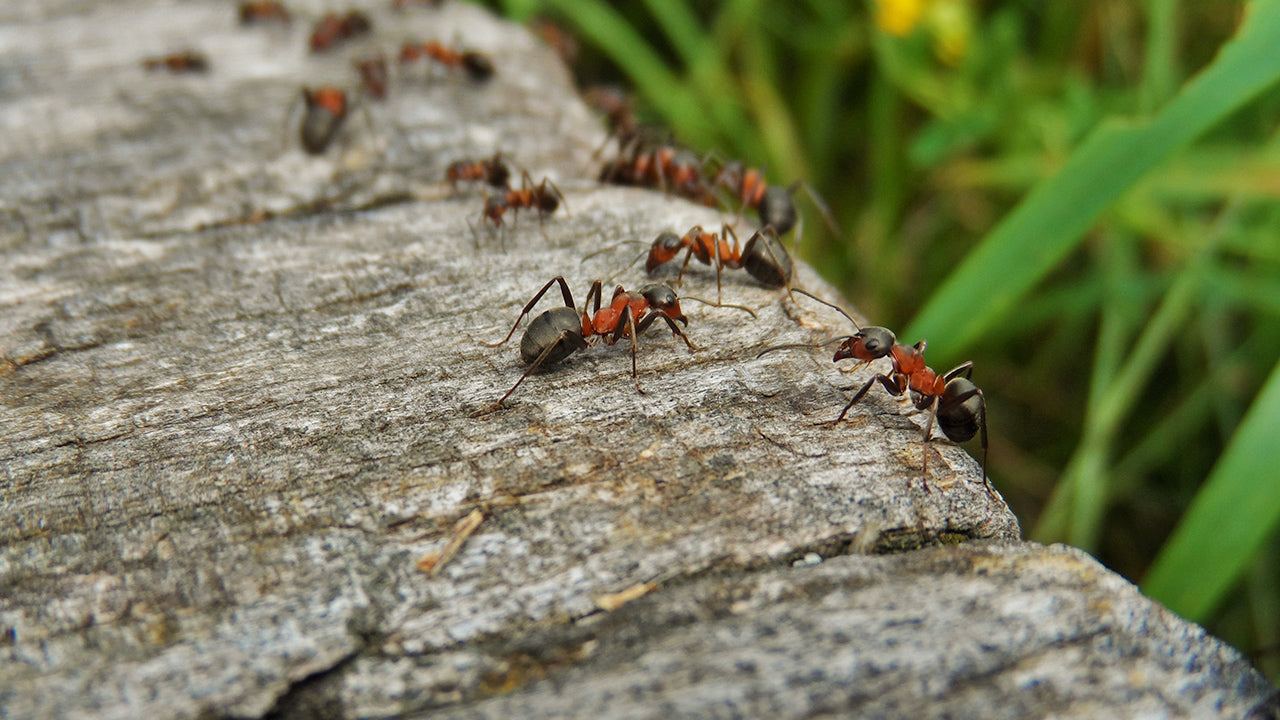 Keep Ants Out of Your House!