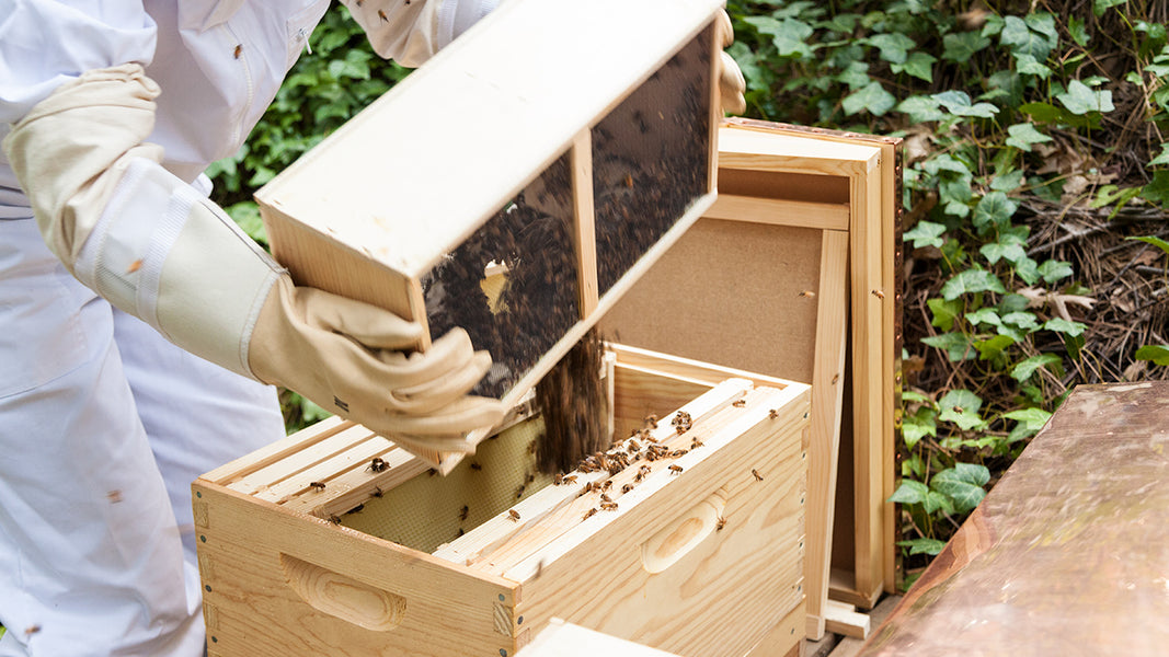Beekeeping For Beginners The First 10 Days With Your New