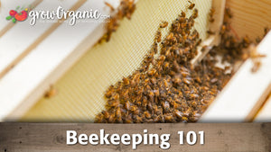 Beekeeping for Beginners: How to Set Up a Hive