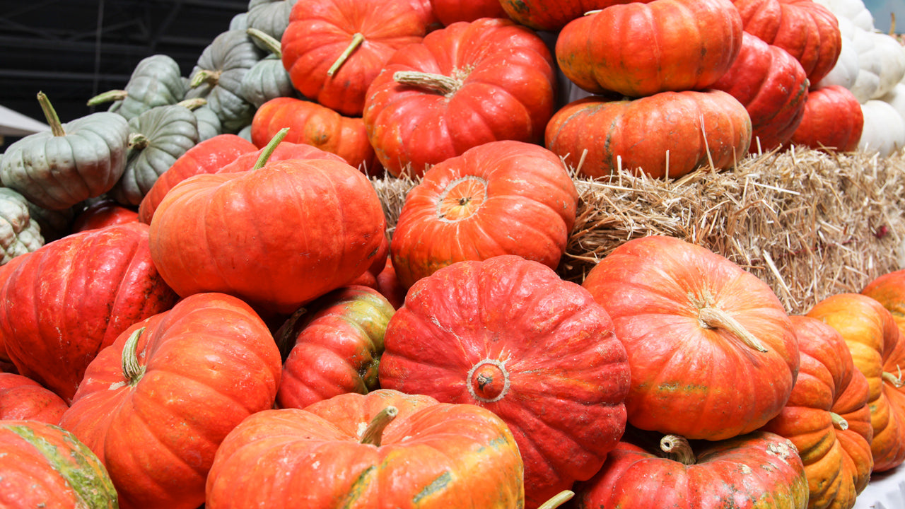 Which is the Best Pumpkin for Your Garden?
