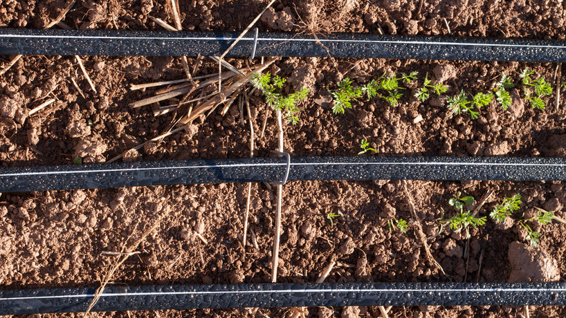 Drip Irrigation Systems (Instead of Sprinklers) for Water Conservation