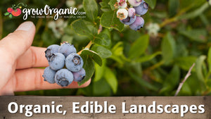 Organic Edible Landscapes