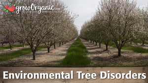Environmental Tree Disorders