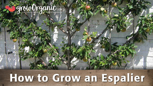 How to Grow an Espalier