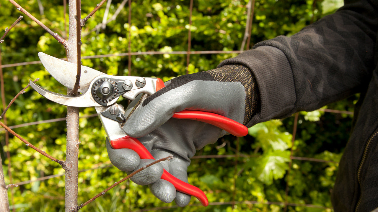 How to Choose the Right Felco Pruner For You