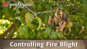 Controlling Fire Blight