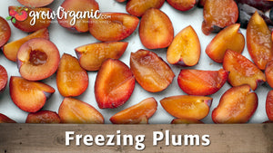 How to Freeze Plums