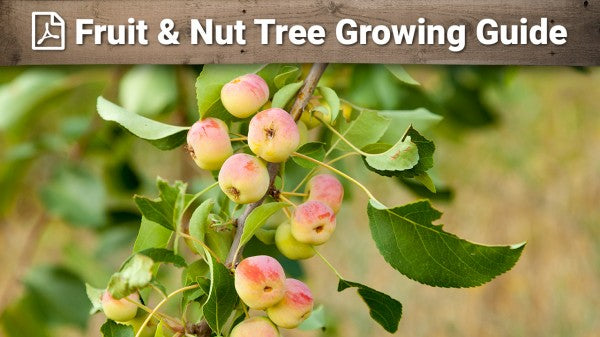 Fruit & Nut Tree Growing Guide