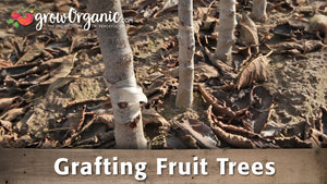 Grafting Fruit Trees with Dave Wilson Nursery
