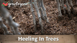 How to Heel In Bare Root Trees
