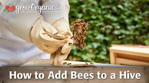 Beekeeping for Beginners: Adding Bees to Your Hive