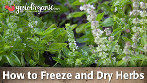 How to Harvest, Freeze & Dry Herbs