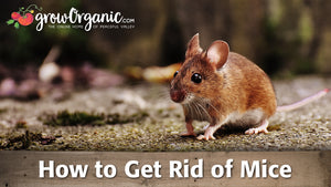 How to Get Rid of Mice & Rats