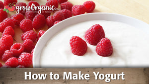 How to Make Yogurt
