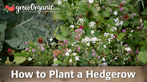 How to Plant a Hedgerow