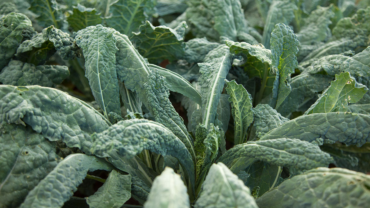 Kale - The Superfood of the Garden