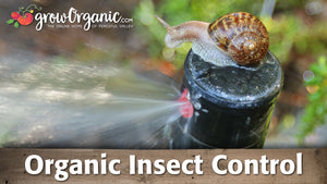 Organic Insect Control: Snails, Earwigs, Aphids, Woodlice & More