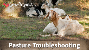 Pasture Troubleshooting