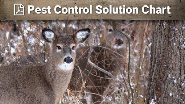 Pest Control Solution Chart