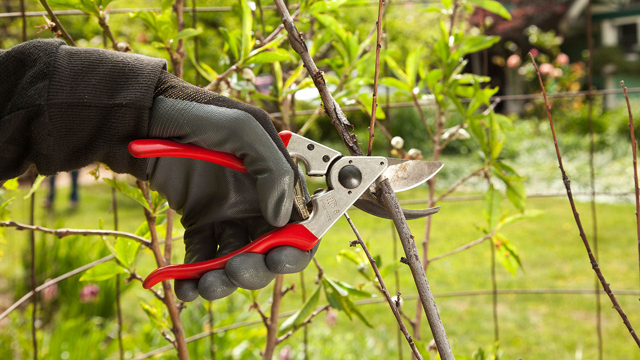 Why Pruning Tools Need to be Sharp & Clean