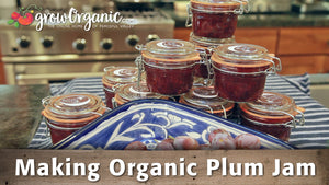 Making Organic Plum Jam