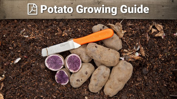 Potato Growing Guide