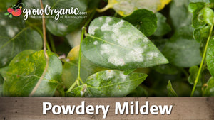 How to Organically Control Powdery Mildew
