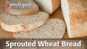 How to Make Sprouted Wheat Bread