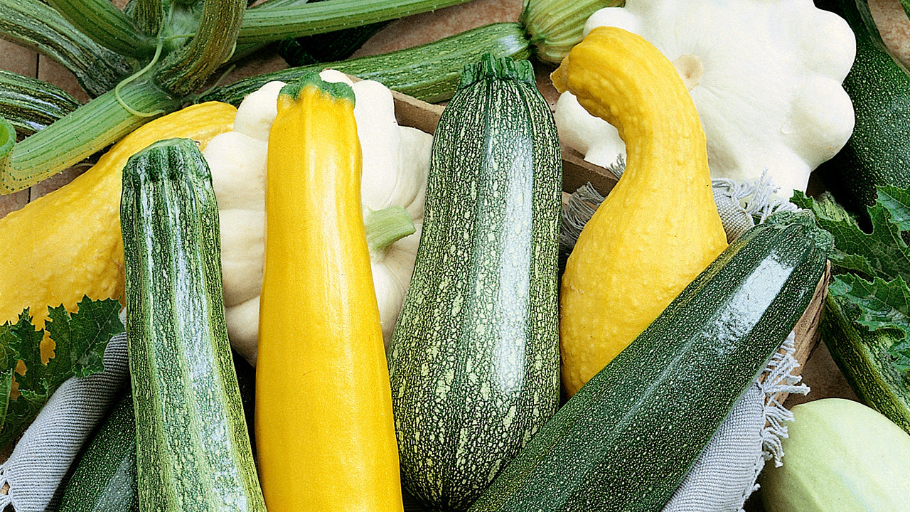 Grilled Summer Squash with Garlic & Herb Marinade
