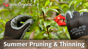Summer Pruning and Thinning