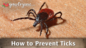 How to Prevent Ticks
