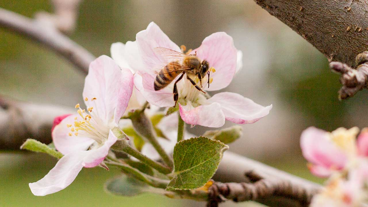 The Best Pollination for Your Fruit Trees
