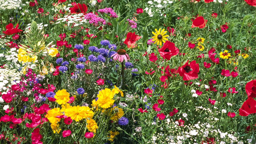 When Is The Best Time To Plant Wildflowers Organic Gardening