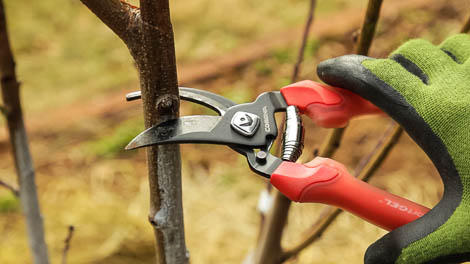branch too big for pruners