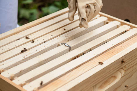 attaching queen cage to hive