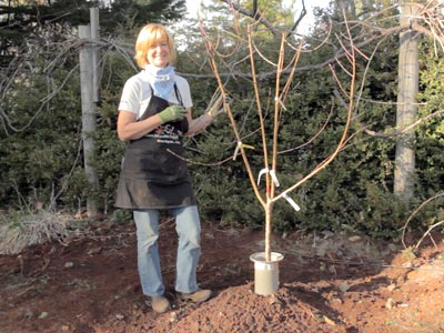 Just Planted Bare Root Tree