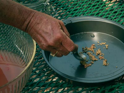 spreading out tomato seeds in a pie tin