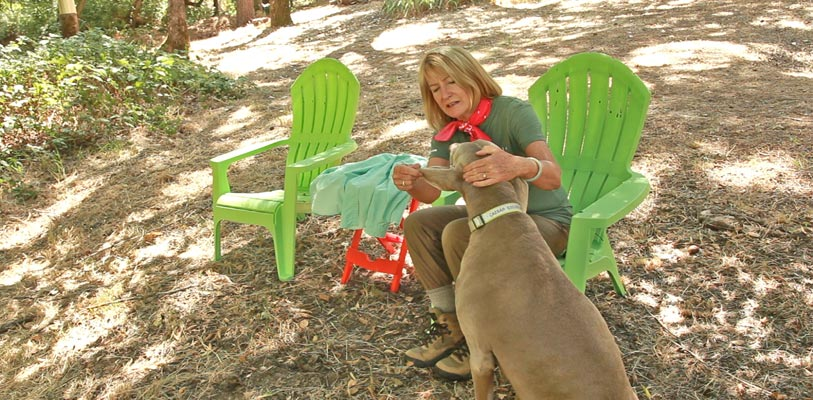 Checking pets for ticks after a walk in the woods