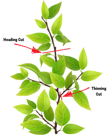 types of pruning cuts