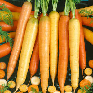 Organic Carrot, Culinary Mix