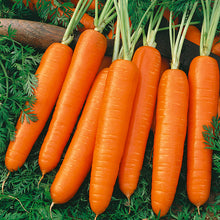 Load image into Gallery viewer, Organic Carrot, Scarlet Nantes
