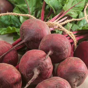 Organic Beet, Green Top Bunching