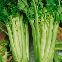 Load image into Gallery viewer, Organic Celery, Tall Utah