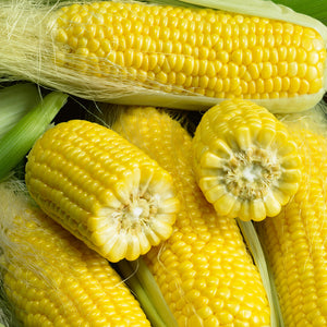 Organic Corn, True Gold