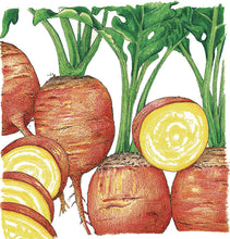 Load image into Gallery viewer, Organic Beet, Golden Detroit