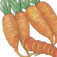 Load image into Gallery viewer, Organic Carrot, Chantenay
